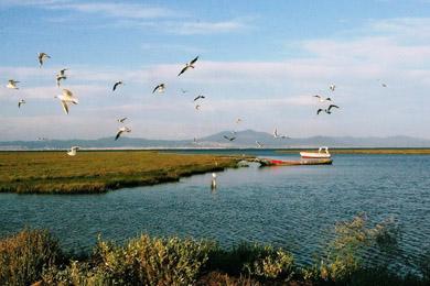 mΕθνικό-Πάρκο-Δέλτα-Αξιού---Λουδία---Αλιάκμονα21